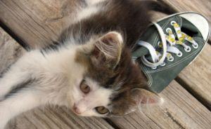 Kitty Moo Moo Loves Converse by MasterofWordsAndArt