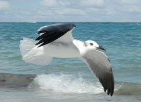 Seagull In Flight by Peace-of-Art