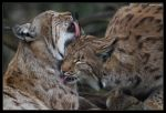 Caring for each other by stetre76
