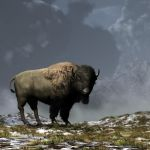 Lonely Bison by deskridge