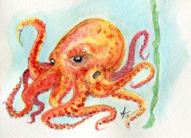 Octopus by alexvontolmacsy