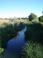 stock - Wetlands by CaliforniaClipper