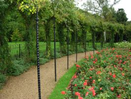 259 - rose garden by WolfC-Stock
