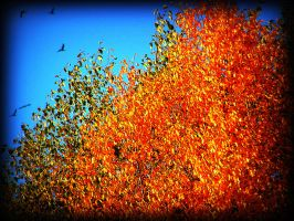 Tree On Fire In Fall by surrealistic-gloom