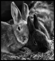 Bunnies by kittykitty5150