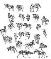 Zebras Everywhere by davidsdoodles
