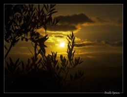 Sunset through a Tree by Cipriano