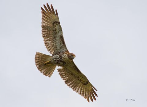Circling the Eagles Nest by Grouper