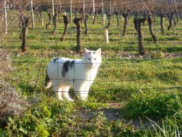 The cat is confined outdoor by AUJEANPAS