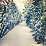 Snowy Path by MrsNena