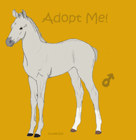 FoalAdoptable4 by ReeseS8