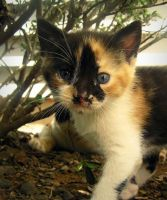 baby kitty. by Brokeallmyconfusion