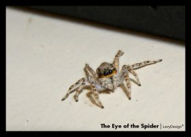 The Eye of the Spider by levydesign