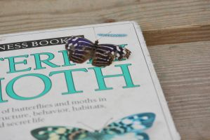Butterfly On Book, Learning the Facts by Miss-Tbones
