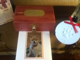 welcome home our precious pomeranian angel by WillowDreams1967