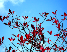 Red Butterfly Tree by XxFreakOfNaturexX
