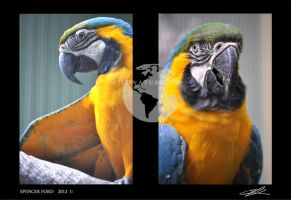 Double Macaw by Sketching-Sketches