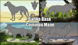 Saliko Base - Common by Mikaley