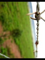 Barbed Wire II by Pianochick66