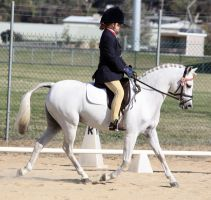 Pony Dressage - Stock - 03 by aussiegal7