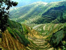 Green Terraces China by CitizenFresh