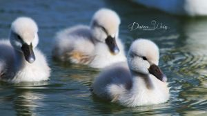 White Cuties by DYWPhotography