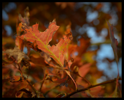 Oranges and Reds by LenSpirations