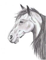 Horse Sketch by SinaWho
