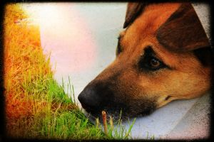 Dog named Honda! by Peterdoesphotography