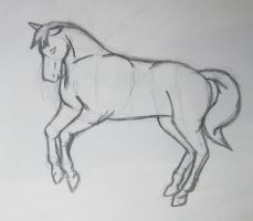 Slight Rear Horse Sketch - NFY by equizotical