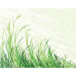 simple grass illustration art by cgvector