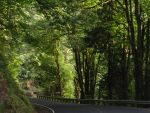 Abernathy Creek Road by CoolPixMom