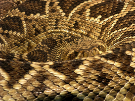 Coiled Gold by Dezfezable