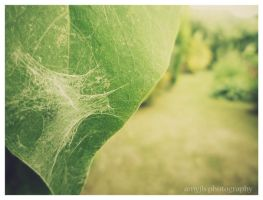 Spider's Web by amyjls