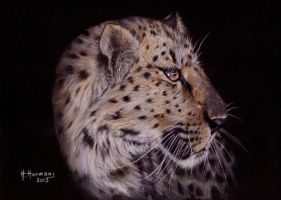 Leopard by HendrikHermans