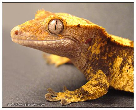 The Happiest Gecko by CatharsisJB