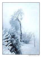 frozen trees by crayz