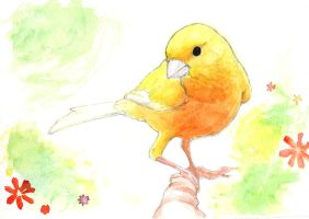 Orange Canary by MondoArt
