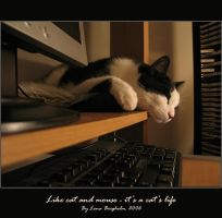 Like cat and mouse -cat's life by aeonmistress