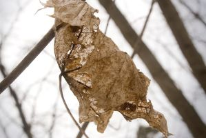 Death in leaf by FoXsPhotos
