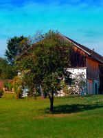 The tree and the farm by patrickjobst