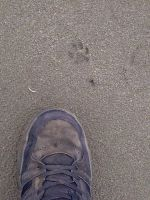 Paw Print Cmpaired the my shoe by KMKramer44