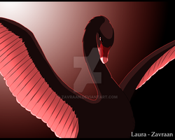 Black swan by zavraan