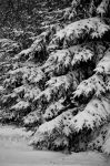 Winter Trees by AndersonPhotography