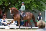 Chestnut Warmblood Extended Trot High Forehand 3 by LuDa-Stock
