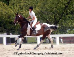 Warmblood 17 by EquineStockImagery