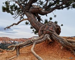 Monster Tree by Moohoodles