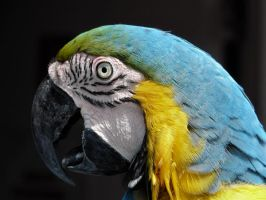 Parrot in Gatorland 2 by jelbo