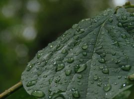 AFTER THE FALLEN RAIN by ANDYBURGESS