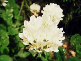 An affable flower by triangularlove